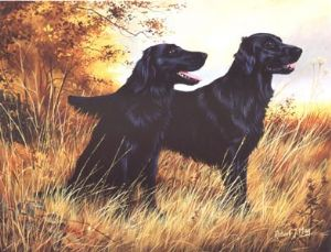 Flatcoated Retriever Open Edition Print